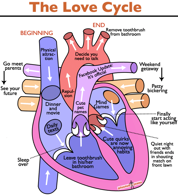 The Love Cycle  Chart