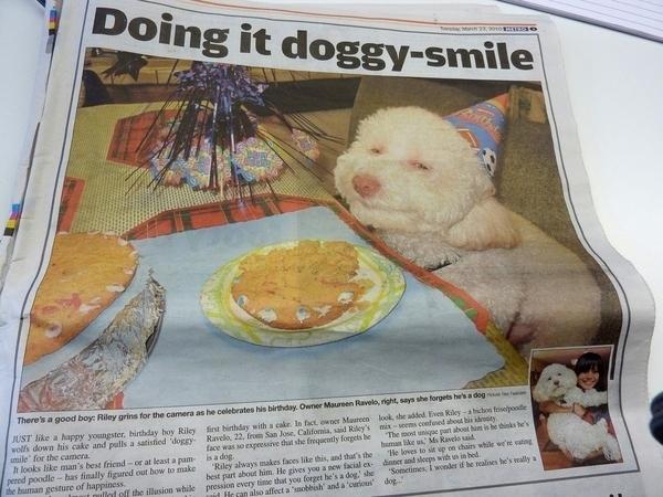 20 of the funniest newspaper headlines
