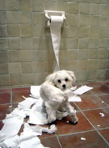 15 Bad Cats And Dogs Making A Mess