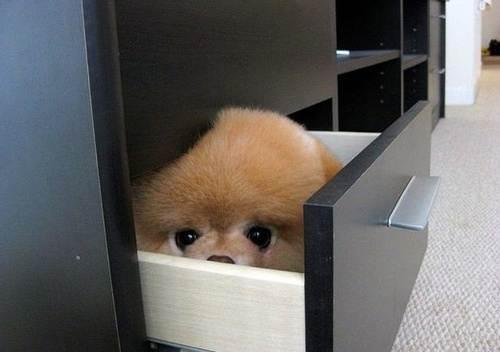 Hiding-Dog-1.jpeg