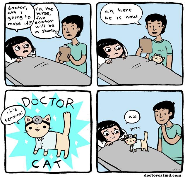 2011-01-10-doctor-cat.jpeg