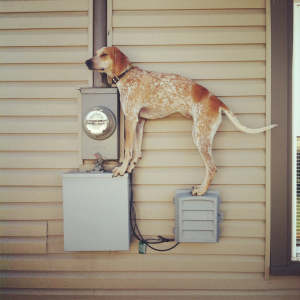 Dog Standing on Things (11)