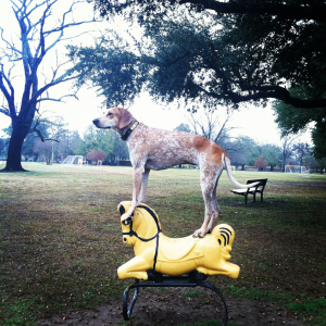 Dog Standing on Things (3)