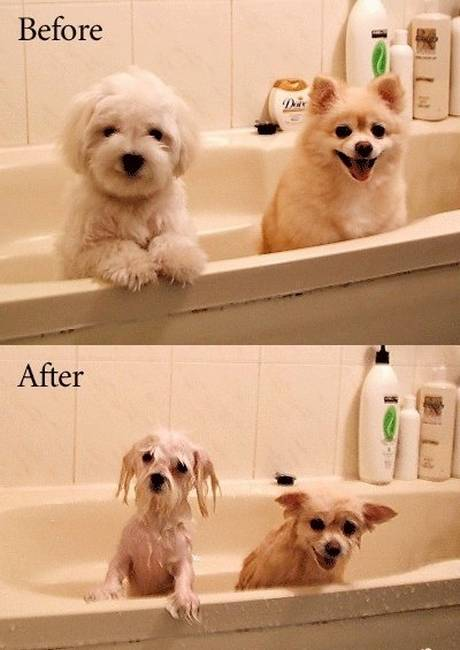 funny before and after 12 pleated