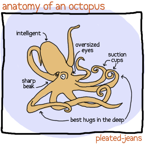 anatomy-of-a-octopus