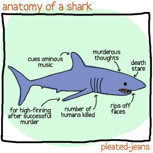 The anatomy of a shark