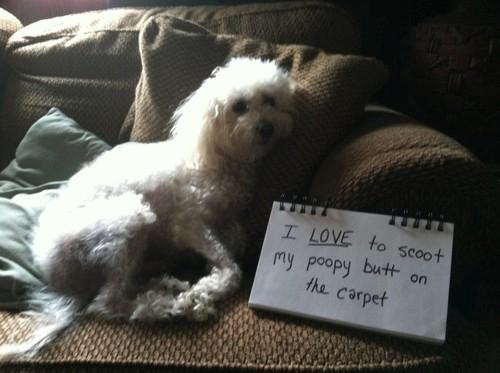 Top  Dog Shaming Videos