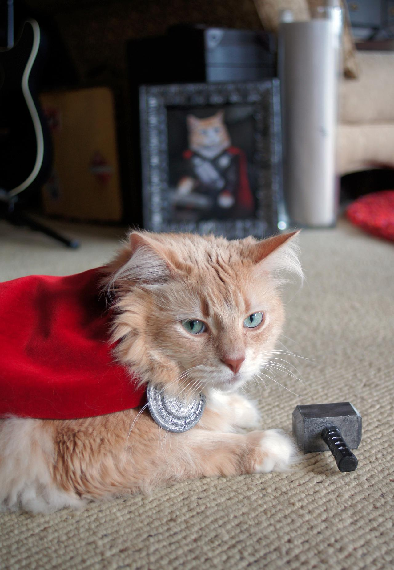 Here S A Cat Dressed Up Like Thor 6 Pics