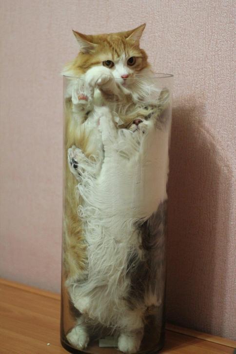 cats are liquid, proof that cats are liquid, proof cats are liquid, cats are liquid picture, cats are liquid pictures, cats are liquid and solid, cats are liquid science, why cats are liquid, cat memes cats are liquid, cats are fluid, cats are fluid picture, cats are fluid pictures