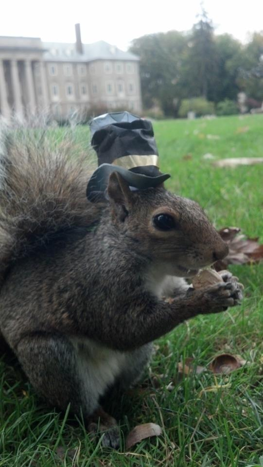 Sneezy the Squirrel Loves Wearing Hats (15 Pics)