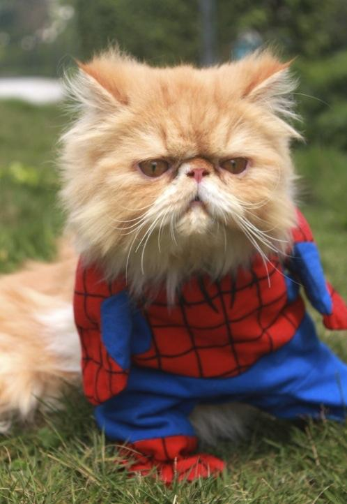 16 Superhero Cats That Are Here To Rescue You