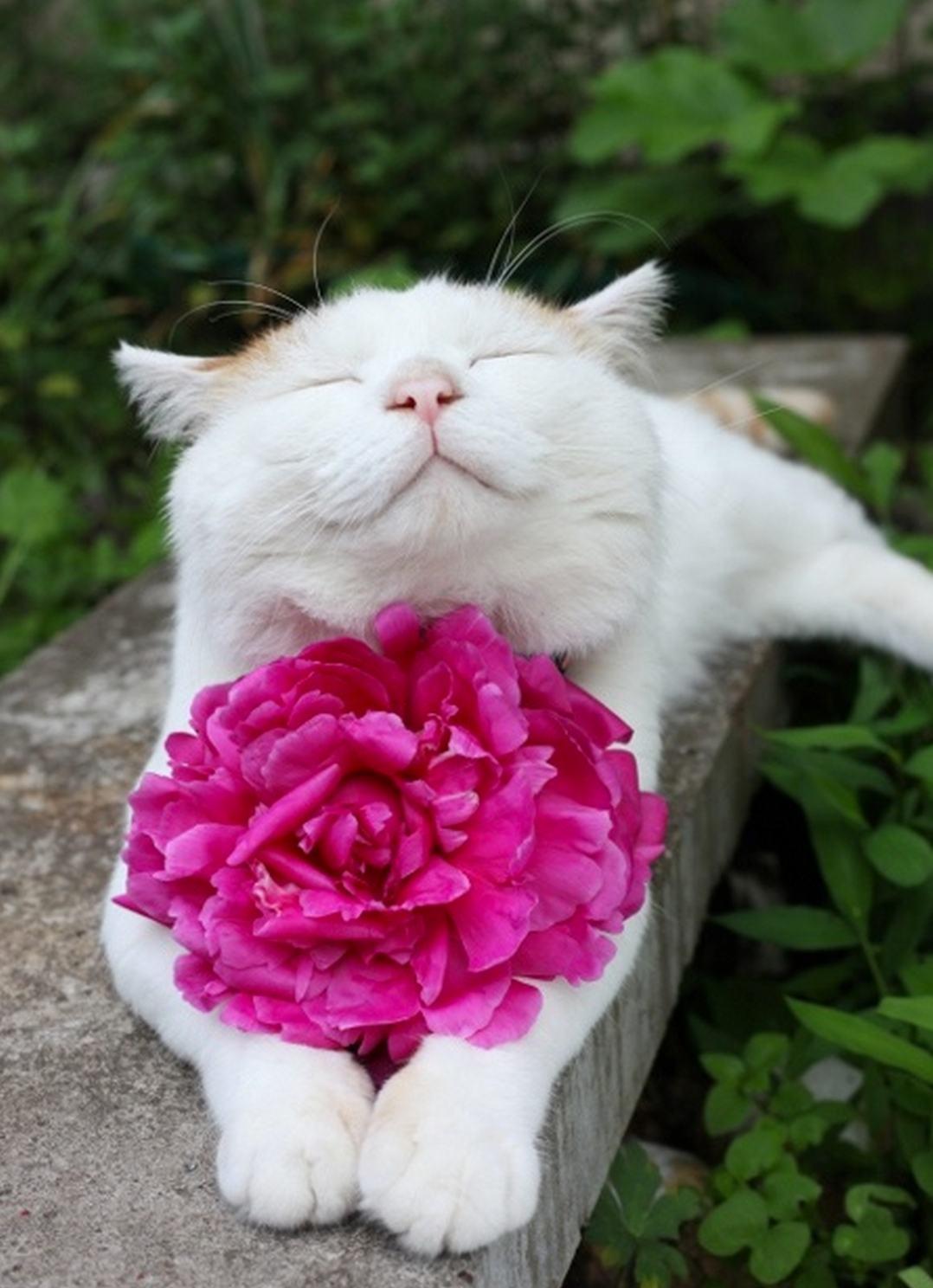 Цветы котики