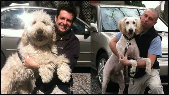 Funny Dog Haircuts Before And After 10 Pleated Jeans