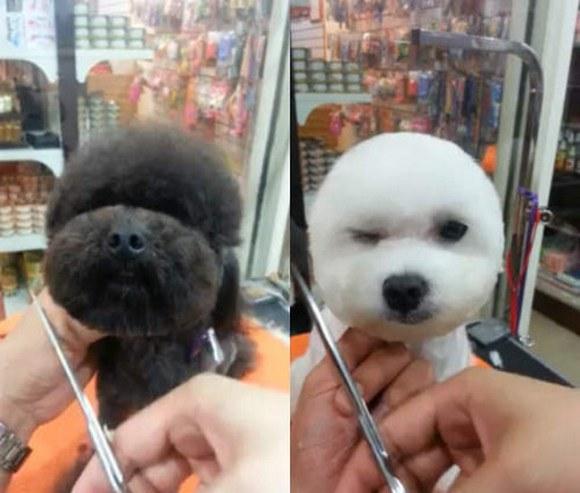 стрижка собаки своими руками видео