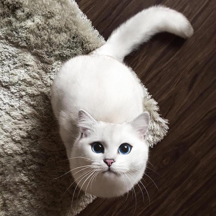 Cat S Eyes Le Film