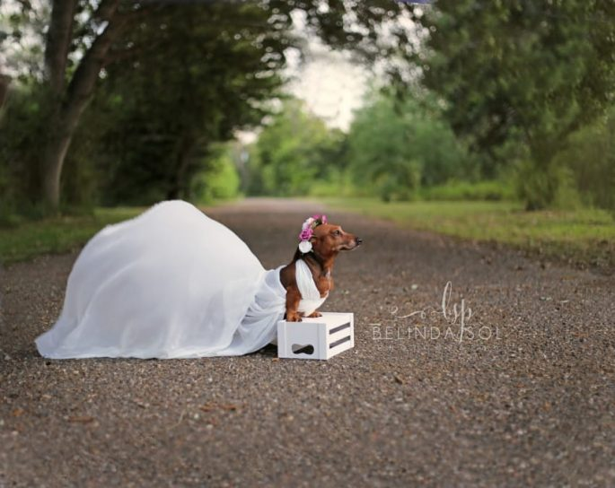 Nothing is Cuter Than This Maternity/Wedding Photoshoot ...