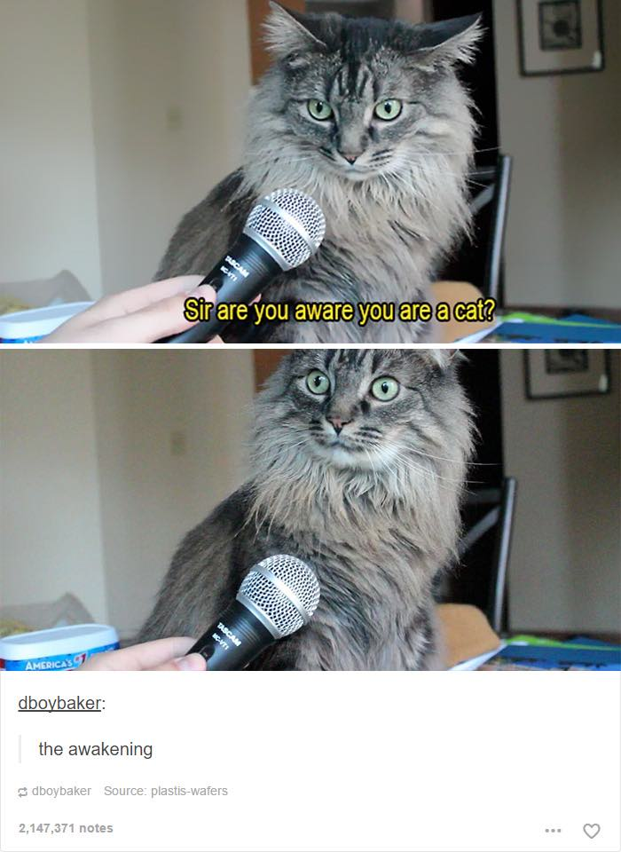 Cat Dumb Kitten Tumblr Post