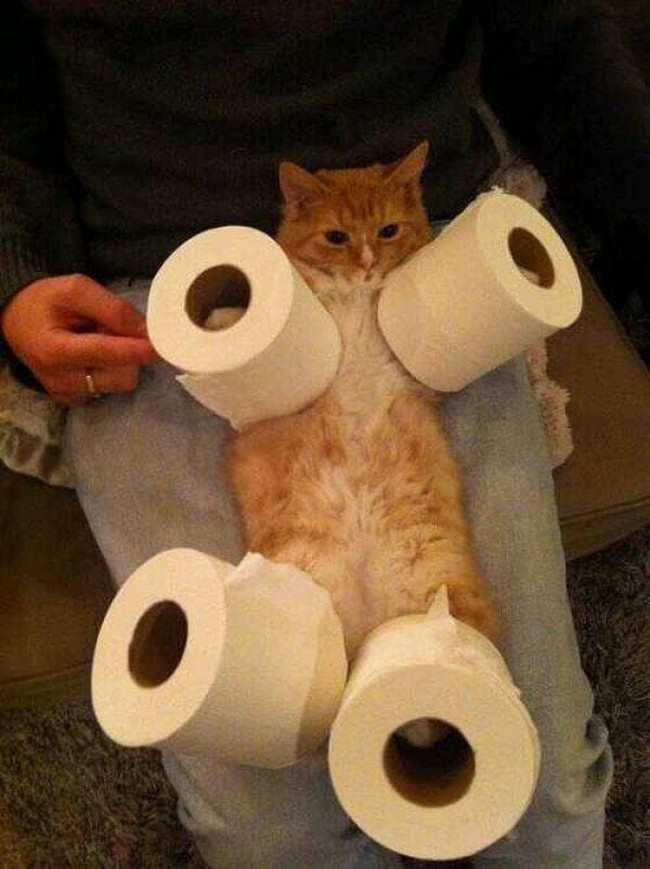 13 animals resigned to their fate pleated jeans for Commode kitty