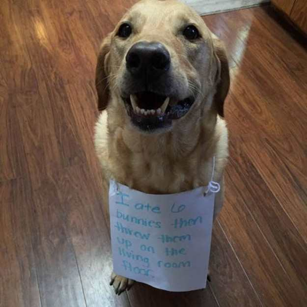 25 Best Pet Shaming Pics | Pleated Jeans How To Draw A Puppy