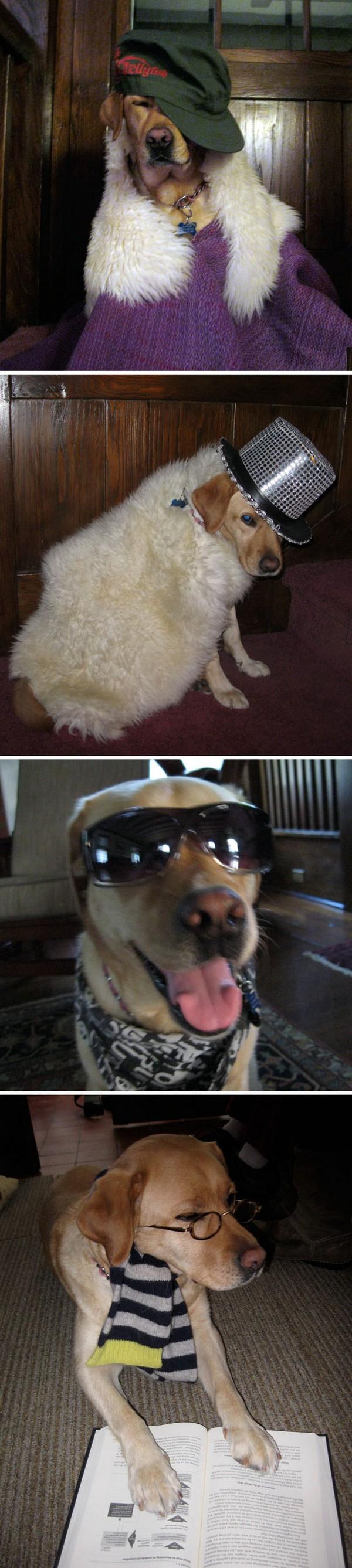 Pets At Home Dog Bubbles