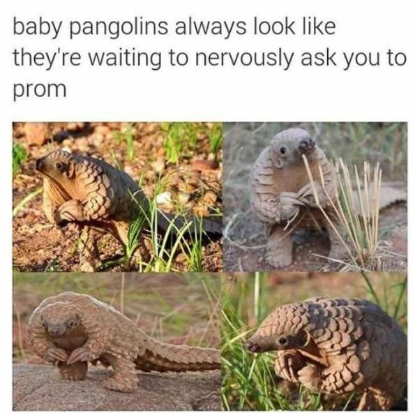 Funny Pictures With Captions Clean With Animals 29 Wholesome Animal Me...