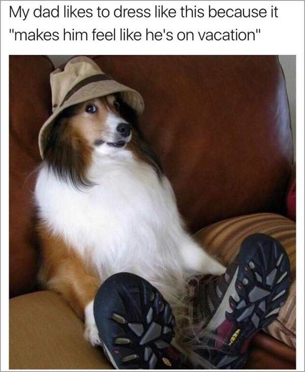 30 Good And Nice Dog Memes
