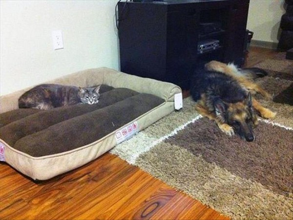 Cats Taking Over Dog Beds 19 Pics Pleated Jeans