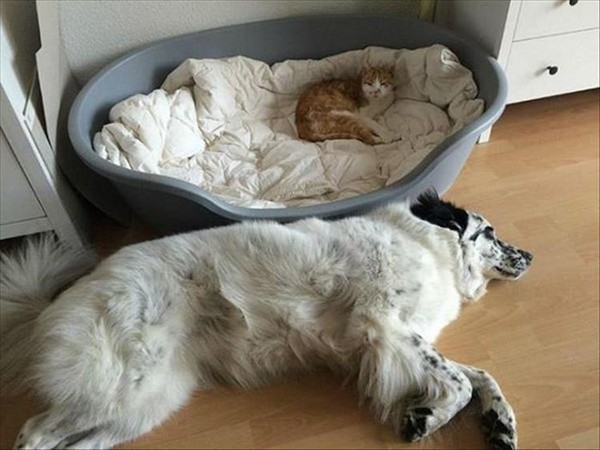 Cats Taking Over Dog Beds