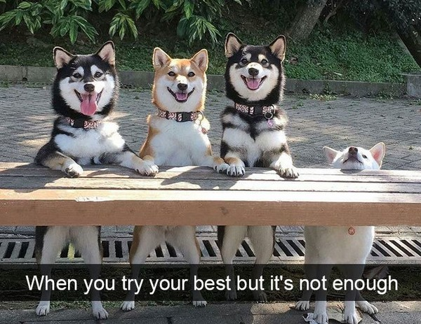 19 Adorable And Funny Dog Pics With Captions Pleated Jeans