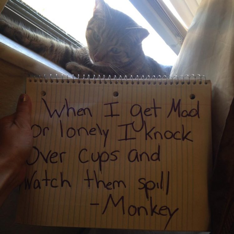 30 Trouble Making Cats Who Don T Give A F K What You