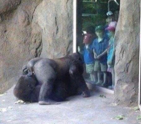 gorillas 69 image, gorillas 69 picture
