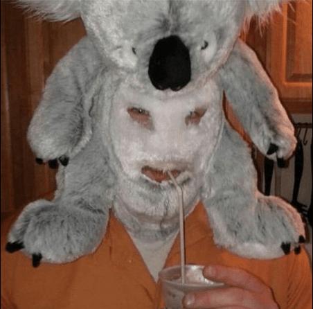cursed Koala mask, cursed koala mask image, cursed koala mask picture
