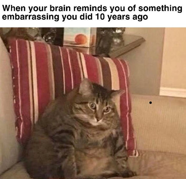 funniest memes 2019, funniest memes, funny cat memes