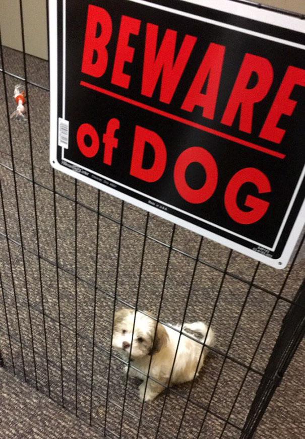 beware of dog signs, beware of dig, beware of dog cute, cute dogs, funny dogs, cute dogs behind sign, beware of cat