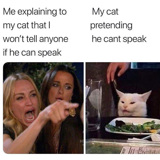 woman yelling at a cat memes, woman yelling at cat meme, funny meme woman cat yelling, memes real housewives of beverly hills cat, cat yelling meme, best memes 2019, the real housewives of beverly hills, taylor armstrong, kyle richards, smudge the cat