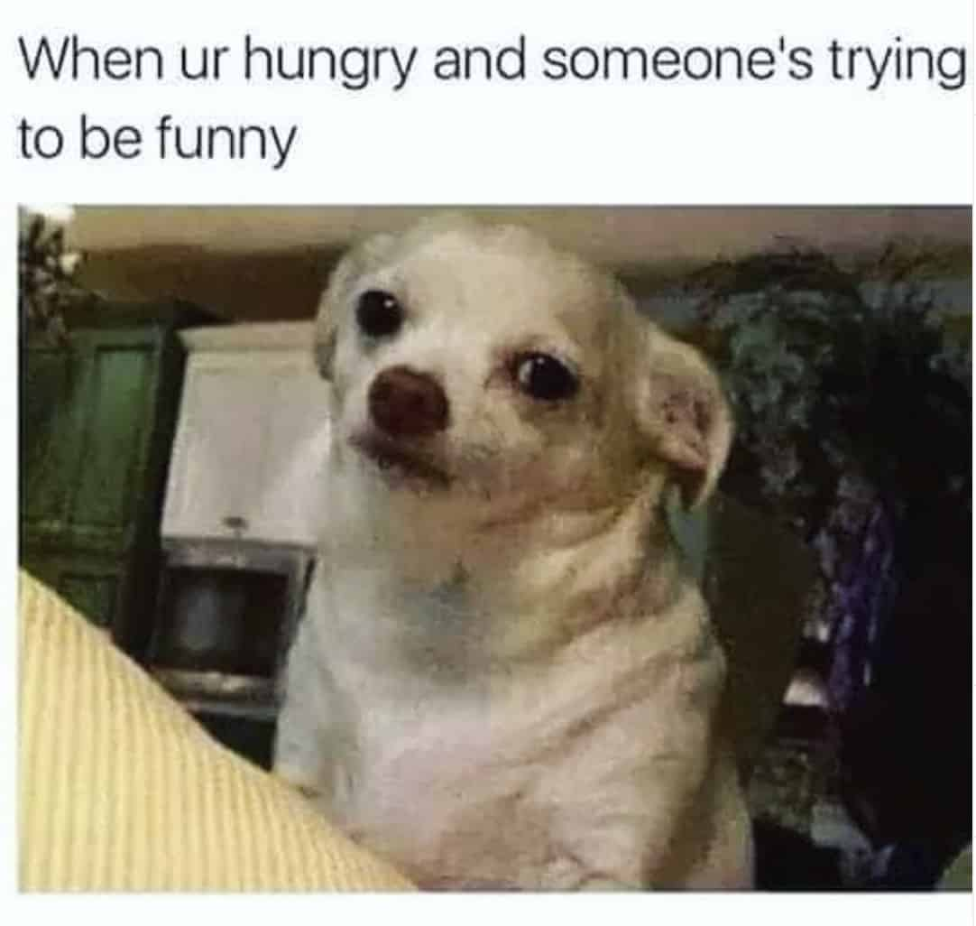 trying to be funny hangry meme, hangry meme, hangry memes, funny hangry meme, funny hangry memes, hungry meme, hungry memes, funny hungry meme, funny hungry memes, hangry joke, hangry jokes, funny hangry joke, funny hangry jokes, being hungry meme, being hungry meme, angry hungry meme, angry hungry memes, hunger anger meme, hunger memes, being hungry jokes, angry food meme, hungry joke, hungry jokes, hunger meme, funny hunger meme, funny hunger memes, hangry funny, hunger anger meme, hunger anger memes