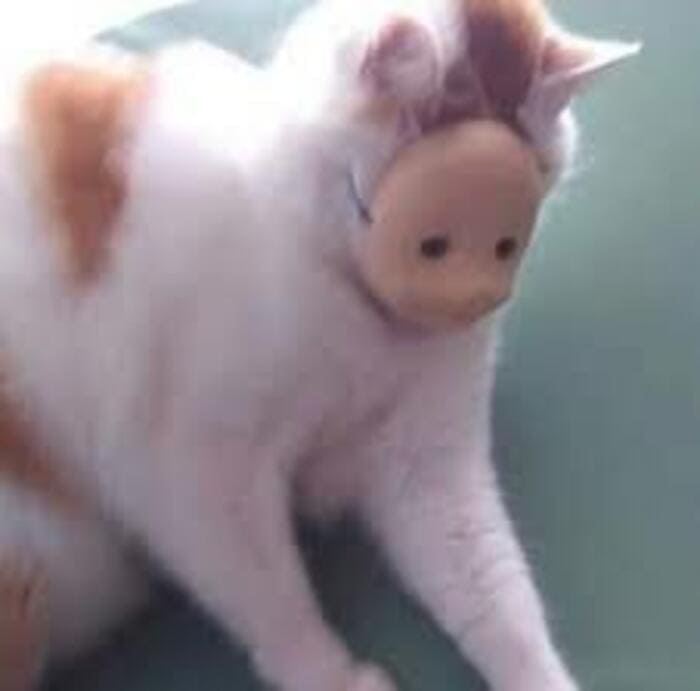 cat with doll face mask, cat with doll mask, cursed cat image, cursed cat, cursed cat picture