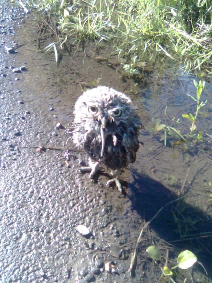 crappy wildlife photos, bad animal pics, funny animal pics, funny photos, photography