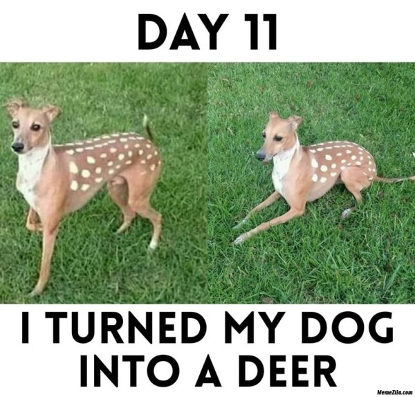 Funny Dog Memes Aren't The Best Medicine But They Help