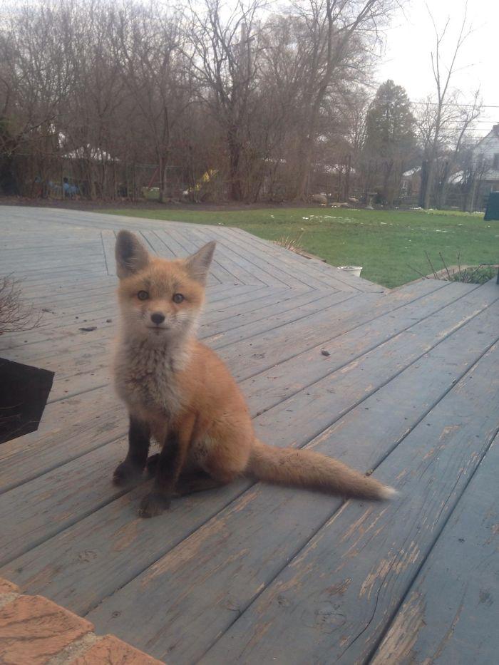 cute fox pictures, fox pictures cute, pictures of a cute fox, a cute picture of a fox, cute animal pictures fox, cute animals pictures of fox, cute picture of a fox, cute picture of foxes, fox cute picture, fox cute pictures, pictures of foxes cute, cute fox, cute foxes, fox picture, fox pictures, best cute foxes, best cute fox, cute fox pics, cute fox image, cute fox pic, cute fox image, fox pic, fox pics, fox image, baby fox