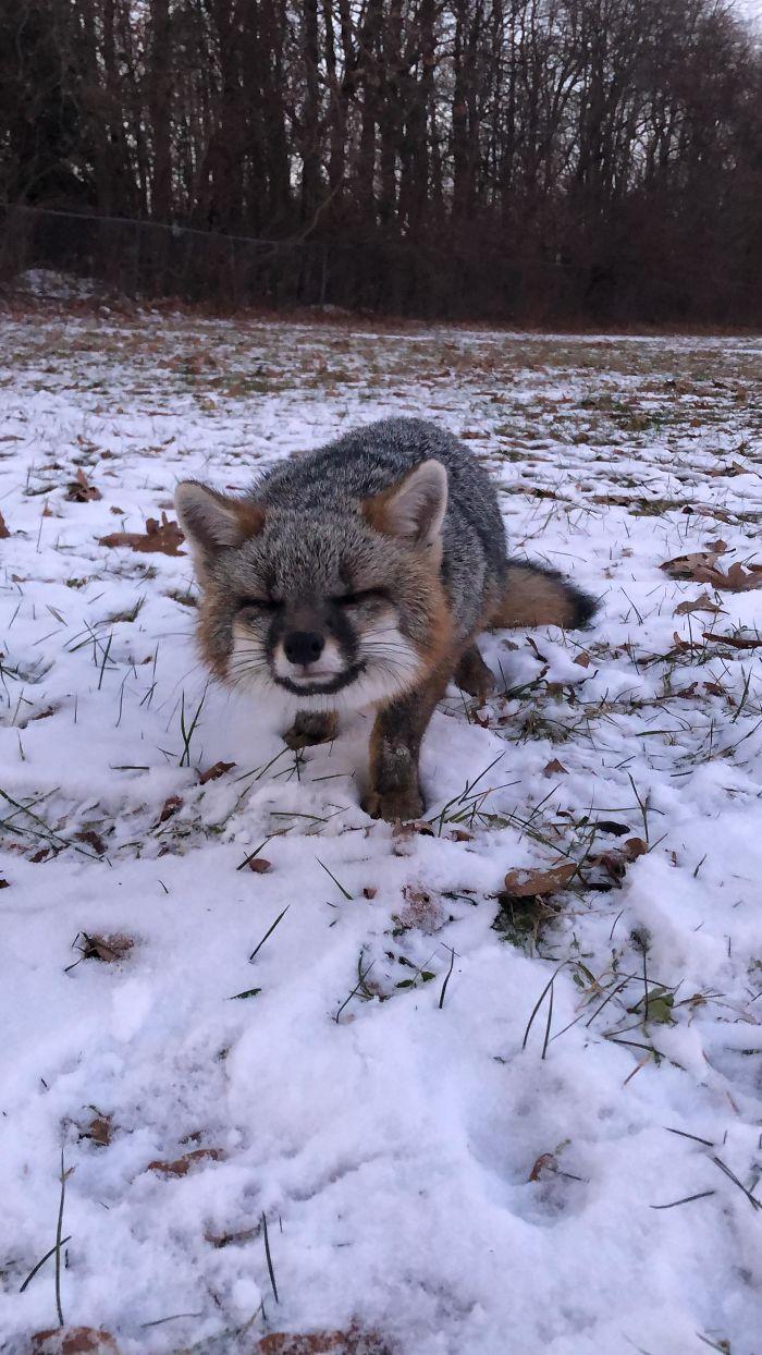 cute fox pictures, fox pictures cute, pictures of a cute fox, a cute picture of a fox, cute animal pictures fox, cute animals pictures of fox, cute picture of a fox, cute picture of foxes, fox cute picture, fox cute pictures, pictures of foxes cute, cute fox, cute foxes, fox picture, fox pictures, best cute foxes, best cute fox, cute fox pics, cute fox image, cute fox pic, cute fox image, fox pic, fox pics, fox image, tiny fox, little fox