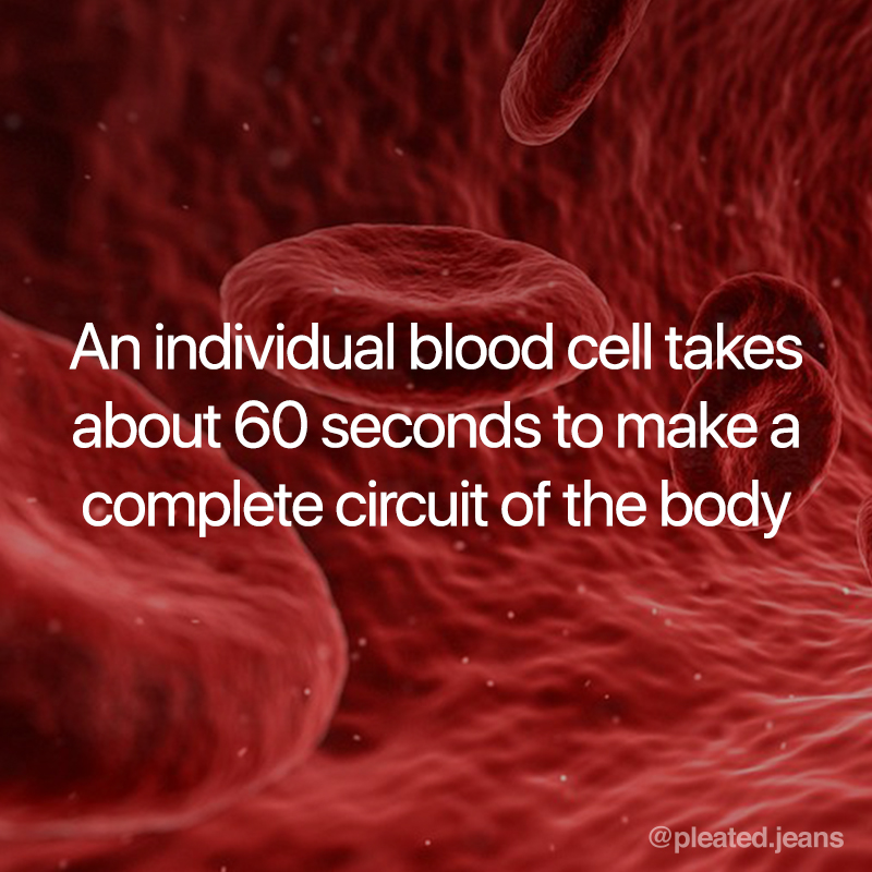 takes about 60 seconds for one blood cell to circulate body, blood cell science fact, circulation science fact