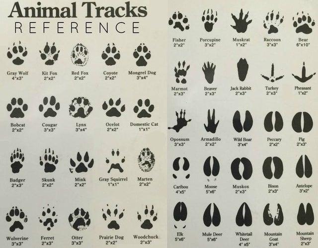 animal tracks reference, animal track chart, animal tracks chart, chart of animal tracks
