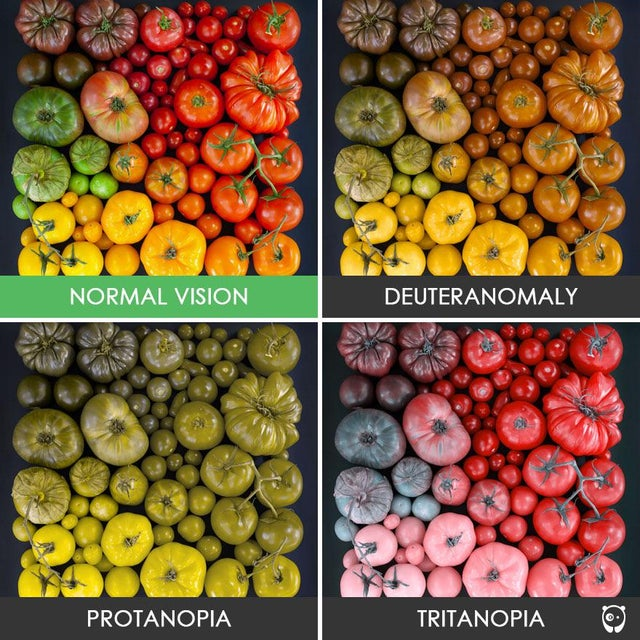 forms of color blindness chart