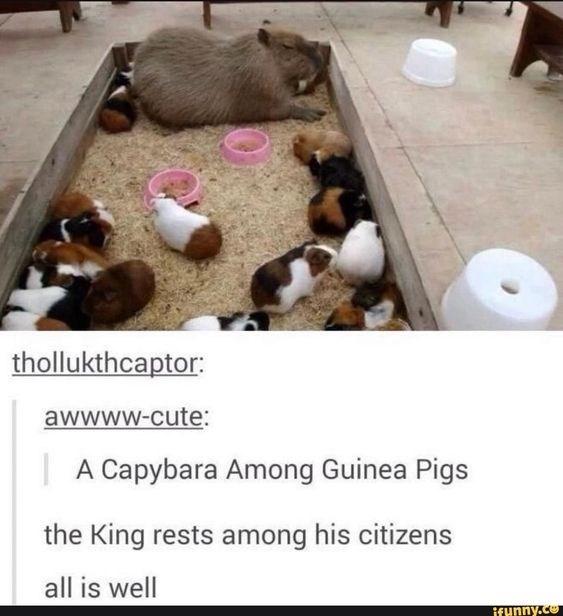 box of guinea pigs, guinea pigs in box, guinea pig meme, guinea pig memes, cute guinea pig meme, funny guinea pig meme, guinea pigs meme, guinea pigs memes, cute guinea pigs memes, cute guinea pigs meme, funny guinea pig memes, cute guinea pig memes, cute guinea pig picture, cute guinea pig pictures, funny guinea pig picture, funny guinea pig pictures, cute guinea pig, very cute guinea pig, cute guinea pig pic, cute guinea pig pics, cute guinea pigs pictures, funny guinea pigs pictures, clean memes guinea pigs, cute guinea pig meme, cute guinea pigs memes, dank guinea pig memes, dank memes guinea pig, funniest guinea pig memes, funny guinea pig meme, funny guinea pig memes clean, funny guinea pigs memes, guinea pig funny memes, guinea pig funny pictures memes, guinea pig meme funny, guinea pig memes clean, guinea pig memes funny, guinea pig picture meme, guinea pigs memes, guinea pigs very cute clean memes, images of guinea pig memes, meme guinea pig, meme guinea pigs