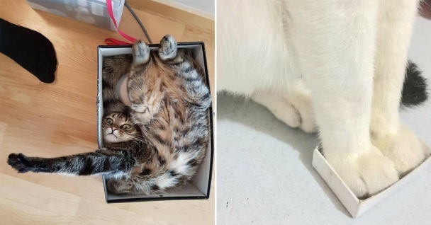 cat in a box, cats in boxes, cats in a box, cat in box, cats in boxes, cat in a cardboard box, cat in cardboard box, cats in cardboard boxes, picture of cat in box, pictures of cats in boxes, cats and boxes, boxes and cats, cat in box picture, cat in box pictures, cats in box picture, cats in box pictures, cute cat in a box, cute cats in boxes, cute cat in cardboard box, cute cats in cardboard boxes, cute cat in box picture, cute cat in box pictures, cute cats in boxes picture, cute cats in boxes pictures, picture of cute cat in box, pictures of cute cats in box, picture of cute cats in boxes, pictures of cute cats in boxes, cute cat in a box, cute cats in boxes, cute cat in a box picture, cute cat in a box pictures, funny cats in boxes, funny cat in a box, funny cat in box, funny cat in box picture, funny picture of cat in a box, funny pictures of cats in boxes