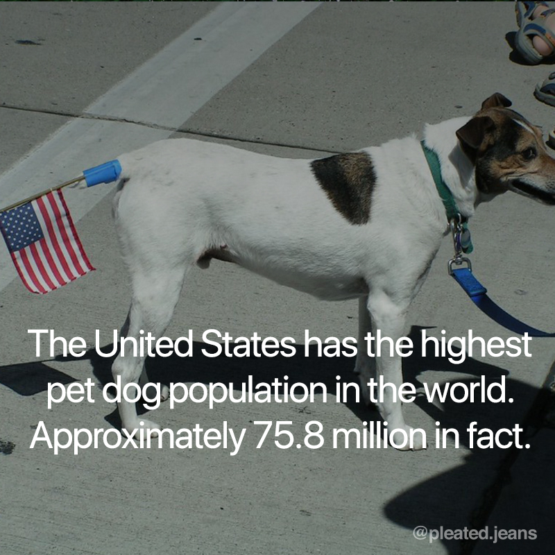 dog facts, fun facts about dogs, interesting dog fact, interesting dog facts, interesting fact about dogs, interesting fact about dog, interesting facts about dogs, cool dog fact, cool dog facts, cool facts about dogs, cool fact about dogs, dog fact, fact about dogs, facts about dogs, sweet dog fact, sweet dog facts, awesome dog fact, awesome dog facts, interesting dog information, interesting dog info, cool dog information, cool dog info, interesting information about dogs, cool information about dogs, awesome fact about dogs, awesome facts about dogs, cool dog info, cool dog information, cool information about dogs