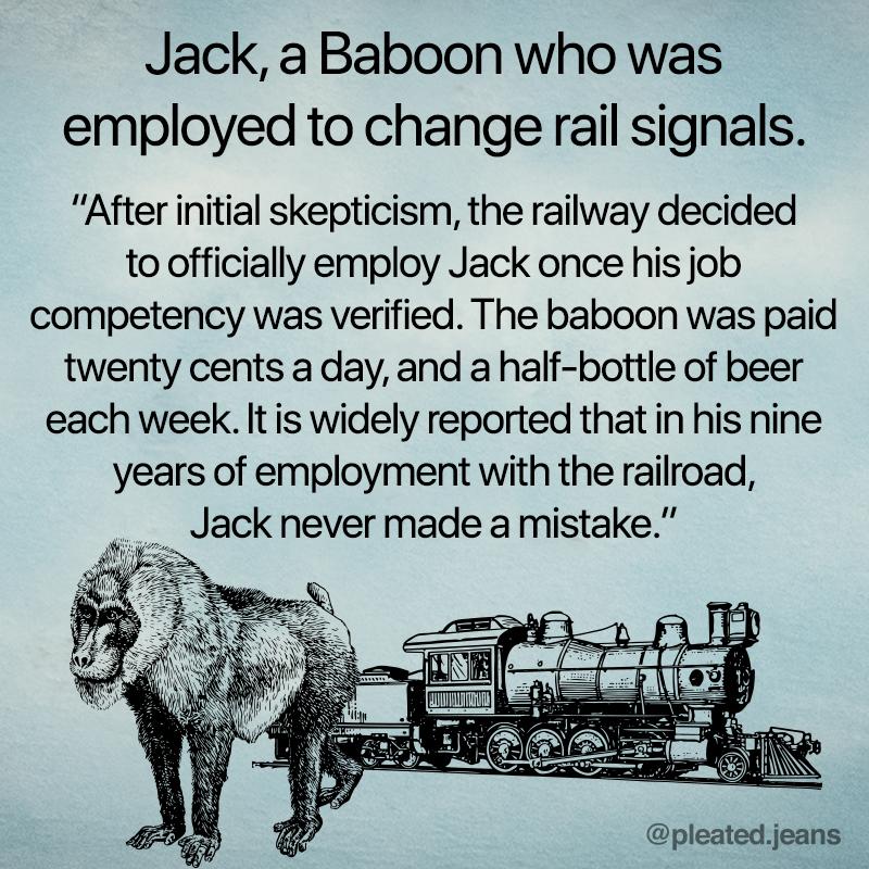 jack the baboon, jack baboon railway, railroad baboon, jack baboon railway, jack railroad baboon, railroad baboon, railroad baboon jack, true fact, true facts, interesting fact, interesting facts, strange fact, curious fact, strange facts, curious facts, weird fact, weird facts, facts that sound made up, fact that sounds made up, really really fact, really really facts, cool fact, cool facts, random fact, random facts, random true fact, random true facts, fact meme, facts meme, fact memes, facts memes, picture with fact on it, pictures with facts, picture with fact, pictures with facts on them