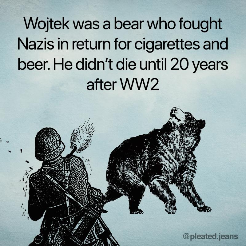 wojtek the bear, wojtek bear, wojtek bear fact