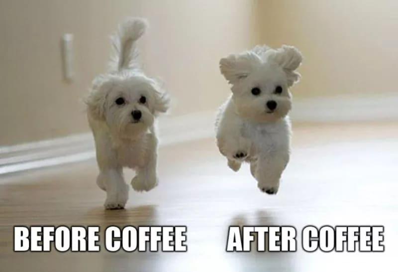 coffee makes me feel cute meme, funny pets after coffee meme, coffee meme, coffee memes, funny coffee memes, funny coffee meme, hilarious coffee meme, need coffee meme, morning coffee meme, coffee time meme, drinking coffee meme, more coffee meme, memes about coffee, hilarious coffee memes, funny memes about coffee, coffee meme images, coffee meme pictures, funny meme about coffee, best coffee memes, meme about coffee, coffee lover meme, coffee lovers meme, joke about coffee, coffee joke, coffee jokes, funny joke about coffee, funny coffee jokes, funny coffee joke, funny coffee picture, funny coffee image, funny pictures about coffee, funny image about coffee, funny picture about coffee